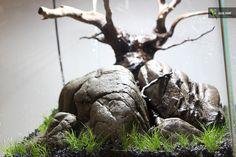 30L Nano Aquarium - Sleepy Hill #aquascaping #aquascape #aquarium #30l #nano #biconeo