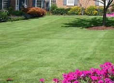 What Is The Best Soil For A Lawn?