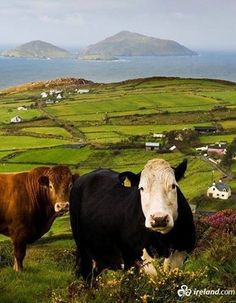 """""""Welcome to our home, County Kerry, known locally as the Kingdom!"""""""
