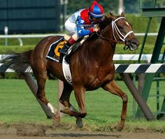 Azeri (1998-). 2002 Horse of the Year