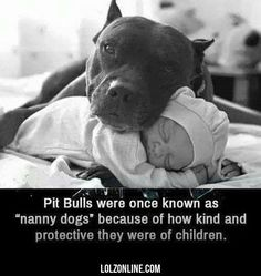 Pit Bulls Were Once Known As Nanny Dogs Because #pitbull