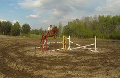 https://wspieram.to/1475-skoczny-wiosenny-debiut.html #horse #sport #koń