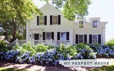 weisses Haus, schwarze Fensterläden, blaue Hortensien