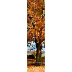 Late Fall Orange