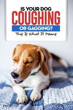 Dog Coughing and Gagging? This Is What It Means and What You Do