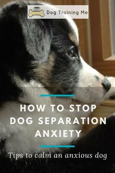 Learn how to stop dog separation anxiety starting today. Find out what's making your dog anxious, how to recognize the symptoms, and what you need to do to stop separation anxiety for good. Give your anxious dog comfort today by reading our article. #dogs