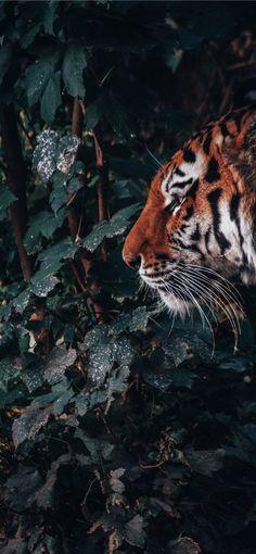 The beast in the jungle iPhone X wallpaper Das Biest im Dschungel iPhone X Hintergrundbild . Wallpaper Gatos, Tier Wallpaper, Beast Wallpaper, Nature Wallpaper, Tiger Wallpaper Iphone, Wild Animal Wallpaper, The Beast, Animals Images, Nature Photography