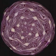 Looking at food shapes to see the fibonacci numbers in nature and the golden spiral. Make your own golden spiral with this simple puzzle. Patterns In Nature, Textures Patterns, Spirals In Nature, Fibonacci Spiral In Nature, Cabbage Juice, Cabbage Salad, Purple Cabbage, Natural Forms, Fractal Art