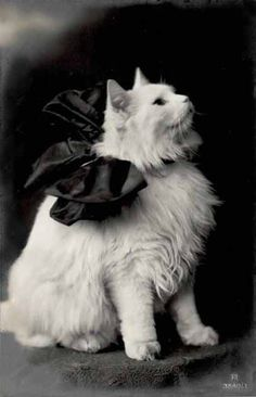 Vintage White Cat with Bow Pretty Cats, Beautiful Cats, Pretty Kitty, Crazy Cat Lady, Crazy Cats, Animals And Pets, Cute Animals, Photo Chat, White Cats