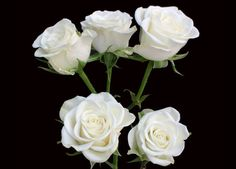 DIY wedding flowers - free step by step picture tutorials. Professional floral supplies demonstrated by a wedding florist Diy Wedding Flowers, Diy Flowers, Flower Decorations, Flower Ideas, White Spray Roses, White Roses, Discount Flowers, Flower Spray, Blooming Rose