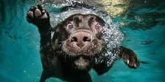 LABRADOR – Who can resist a lab puppy? ❤ Labrador Retriever: Found you! Dog Photos, Dog Pictures, Animal Pictures, Funny Pictures, Guys Photos, Adorable Pictures, Hilarious Pictures, Crazy Photos, Funny Images