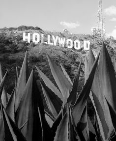 The Hollywood Sign and Blue Agave by Jeremiah Christopher Hollywood Glamour, Hollywood Sign, Vintage Hollywood, Hollywood California, Classic Hollywood, Pin Up Girl Vintage, Vintage Glam, Evil World, Sea To Shining Sea