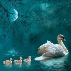 Diamond Painting Swan and Cygnets in the Moonlight Kit Beautiful Swan, Beautiful Birds, Animals Beautiful, Cute Animals, Beautiful Life, Beautiful Things, Animal Spirit Guides, Spirit Animal, Images Vintage