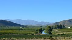 My Eyes, South Africa, Southern, Roses, Wine, Mountains, Country, World, Nature