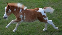 miniature horses for sale - page 263