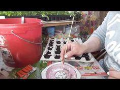 МОРКОВЬ ! САМЫЙ ПРОСТОЙ СПОСОБ ПОСАДКИ МОРКОВИ!!! БЕЗ ПРОРЕЖИВАНИЯ часть 1 - YouTube Wedding Boxes, Youtube, Gardening, Sodas, Lawn And Garden, Garten, Youtube Movies, Horticulture