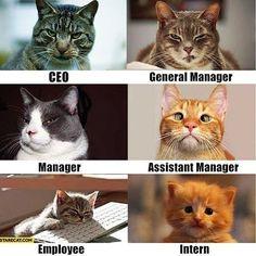 Job descriptions!  #programmers #developers #assistant #manager #ceo #intern #boss #engineers #coding #code #programming #gamers #entrepreneur #civil #job #life #business #funny #igers #followforfollow #likeforlike #hashtags #employee #workers #truestory #cutecat #funnycat #lifeisgood #workinglife #developer
