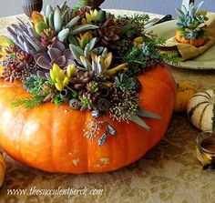 The Succulent Perch Designing With Succulents   DIY Succulent Topped Pumpkins