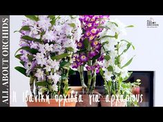 Orchids, Youtube, Plants, Flora, Youtubers, Plant, Youtube Movies, Orchid