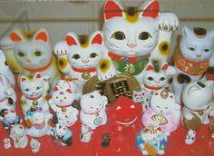 My collection of Maneki Neko, the Japanese calico Bobtail cat.  Good Luck to you all!  @Käären Schilke-Cherns