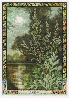 Bài dịch Lá Mugwort – Druid Plant Oracle bài tarot