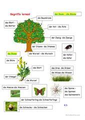 Unsere Bäume Arbeitsblatt - Kostenlose DAF Arbeitsblätter Teaching, Website, Kid Science, Sentence Building, Secondary School, Learn German, Branches, Tree Structure, Education