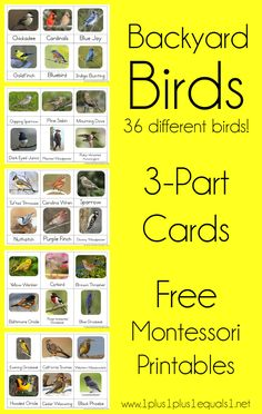 match up/sorting of birds, insects, and many other themes