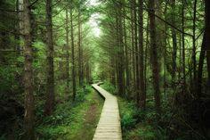 Footbridge into Vancouver Island – populært fototapet Tree Wallpaper, Photo Wallpaper, Vancouver Wallpaper, Office Mural, Tree Forest, Beach Landscape, Vancouver Island, Decoration, Wall Murals