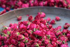 Lovely little pink roses.  (Source: little-secret-garden)