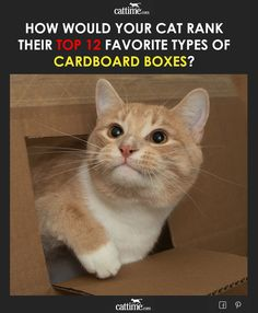 Cats love cardboard boxes. Science has proved this to be a universal truth. Place a cardboard box on the floor, and any and all nearby cats will instantly hop inside of it.