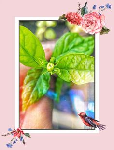 Beautiful Flowers Wallpapers, Flower Wallpaper