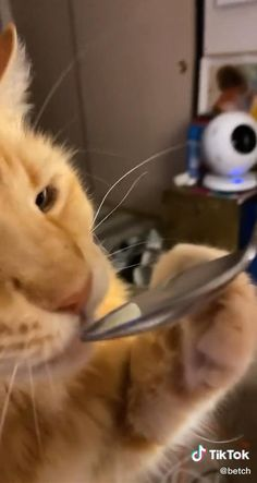 Funny Animal Jokes, Funny Cute Cats, Cute Baby Cats, Cute Little Animals, Cute Cats And Kittens, Funny Animal Videos, Cute Funny Animals, Funny Animal Pictures, Animal Memes