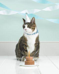 Cat Birthday Hat