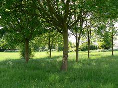 Fields, London, Plants, Plant, London England, Planets