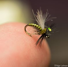 Beautiful little caddis fly.