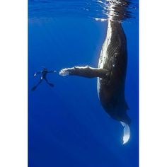 Close encounters under the sea: Marco Queral's photographs of whales - Telegraph  via Design Mom via NYTimes.  (I almost made a new board titled: AMAZING!)