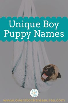 Hello pet lovers, dog lovers Are you a new pet owner? Did you just get a cute puppy or cute dog? Congrats! I created a list of unique dog names male list. You are welcome to have my wonderful list of dog names boy unique list. This list is also for dog male names for puppies. They are super cute puppy names male. I love these male dog names / dog boy unique list.#puppy #puppynames #names #dognames #dog #doglove Cute Male Dog Names, Boy Puppy Names, Unique Cat Names, Pet Memorial Gifts, Dog Memorial, Super Cute Puppies, Cute Dogs, Pet Loss Grief, Famous Dogs