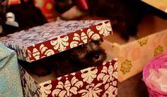 Un regalo muy divertido, unos perritos muy graciosos salen de las cajas de regalos sin parar, una felicitación de cumpleaños muy original. www.risadehttp://www.risadevideos.com/videos-felicitaciones-de-cumpleanos/