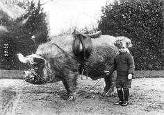 vintageeveryday:  Pig rider, ca. 1930s.