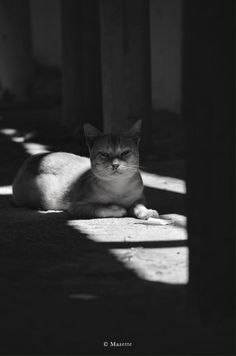 Chat The Mazette : Shadow… ( Ceara, Brazil)    Back to caturday …