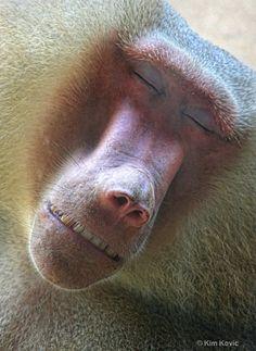 bliss baboon