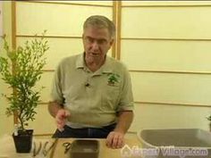 How to Grow Bonsai Trees : How to Make your Own Bonsai : Bonsai Lessons for Beginners  http://www.webgardenofeden.com/bonsai-trees-turning-trees-to-bonsais-technique-video/#