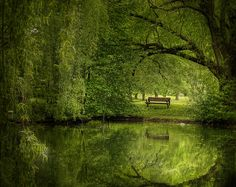 Wouldn't you just love to sit on that bench all day?  #photography #green