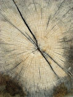 Find images and videos about nature, tree and wood on We Heart It - the app to get lost in what you love. Patterns In Nature, Textures Patterns, Wabi Sabi, Art Grunge, Into The Woods, Tree Bark, Belle Photo, Wallpaper, Wood Grain