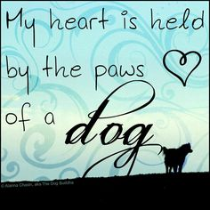 My heart is held by the paws of a dog. <3