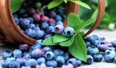 Growing Blueberries – 9 Tips For Planting Blueberry Bushes Fruit Bio, Fruit Juice, Kale Juice, Growing Blueberries, Organic Blueberries, Wild Blueberries, Blackberries, Blueberry Bushes, Blueberry Picking