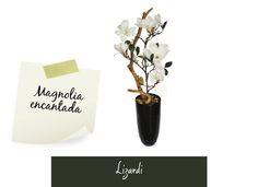 Arreglos florales: Crea entornos delicados con las flores de Magnolia!