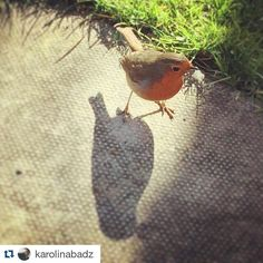 Thanks @karolinabadz for noticing this feathered friend on campusLook at this little beauty  #springintrinity #springindublin #dublin #springinireland #mydublin #trinitycollegedublin #tcddublin #trinitycollege #university #green #spring #birds #nature #city #robin #discoverdublin #enjoyyourcity