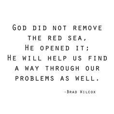 red sea -- brad wilcox
