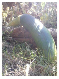 Superfood Secrets: The Cucumber